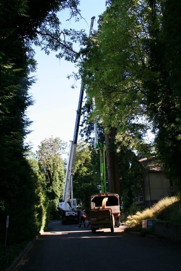 tree hoist 1